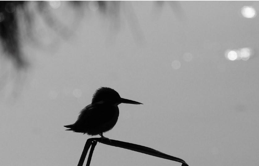Wildlife Photography_Nilesh Mohan Fatnaney_Rediffusion
